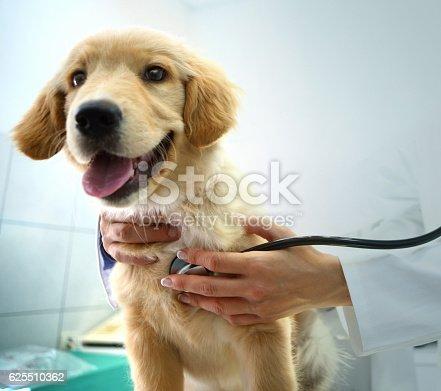 Vet examining a dog.