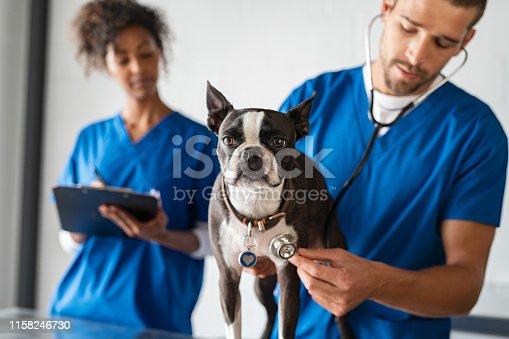 istock Vet examining dog 1158246730
