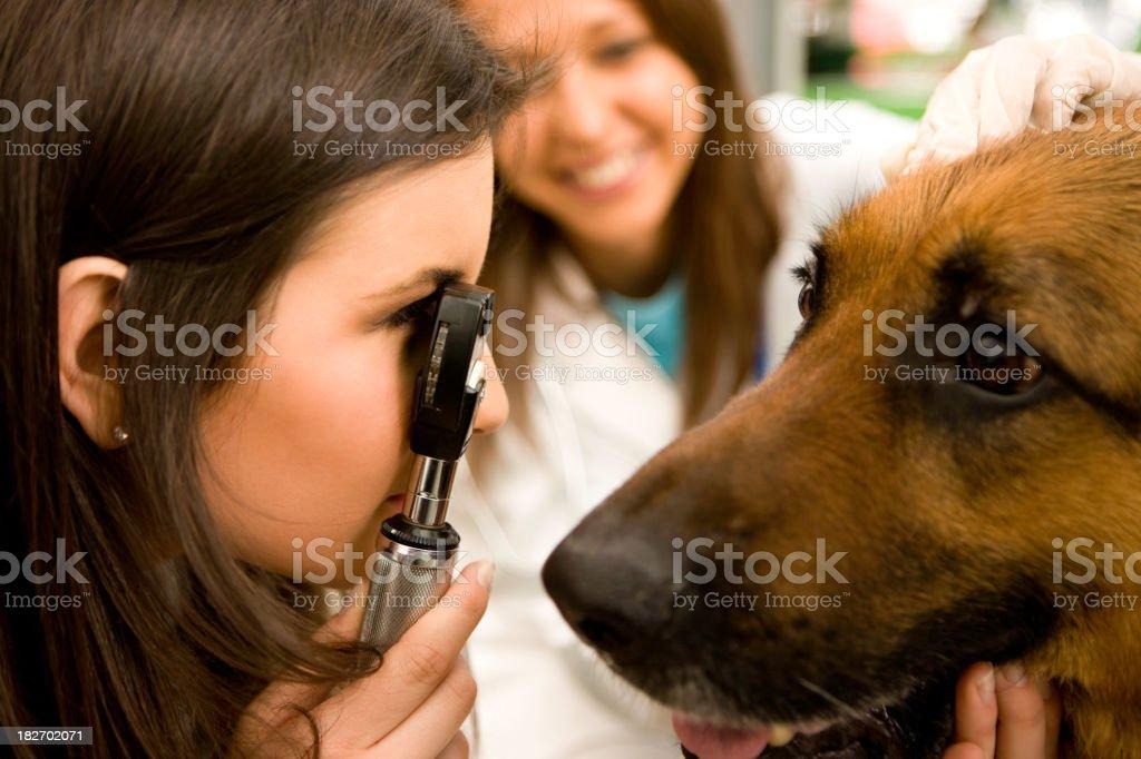 Vet examining dog royalty-free stock photo