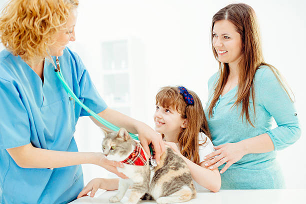 Vet examining little girls cat picture id493072463?b=1&k=6&m=493072463&s=612x612&w=0&h=wbcl7aqxasltbdvrmke77cjndtaujuk8itlwnn8guce=