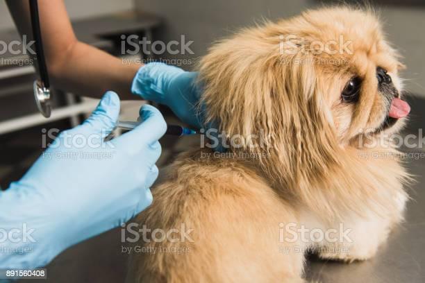 Vet giving an injection to dog picture id891560408?b=1&k=6&m=891560408&s=612x612&h=koqwafpfnrthvps409ssljkqvz5qf 934wjf5lsjy m=