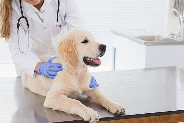 Vet giving dog a check up picture id518379183?b=1&k=6&m=518379183&s=612x612&w=0&h=1 gppeho3 l5heueygyb4b55pr9ioljxvwczui9d2kw=