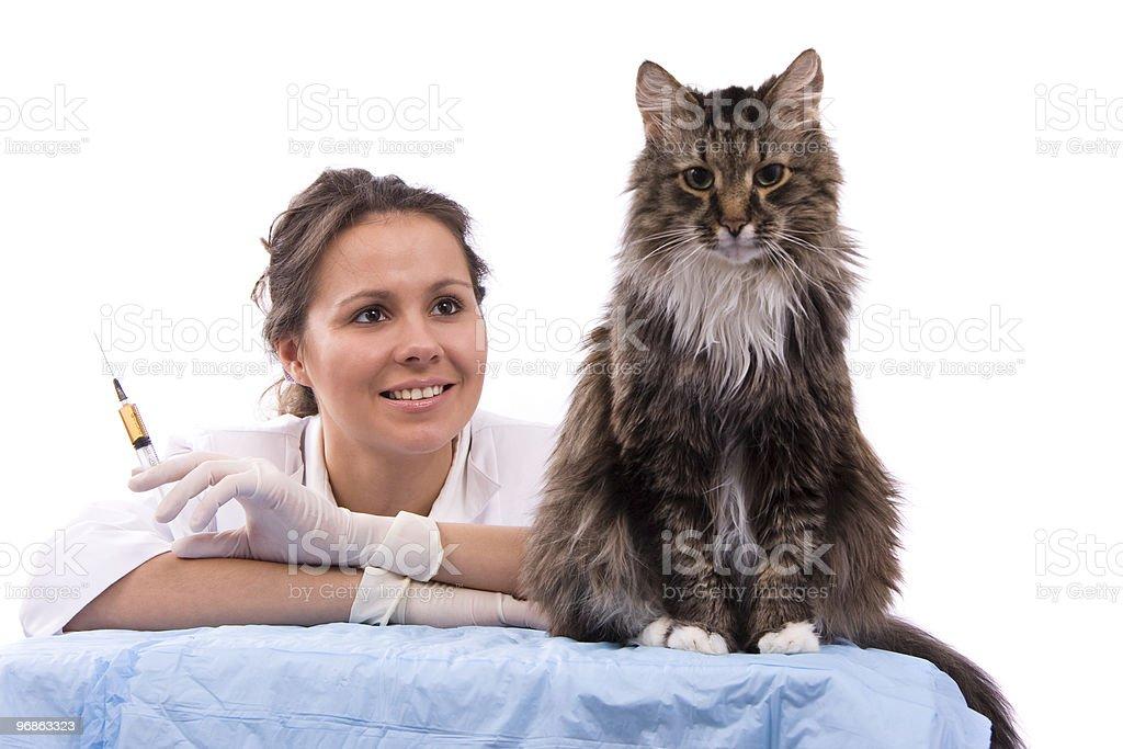 Vet have medical examination cat royalty-free stock photo