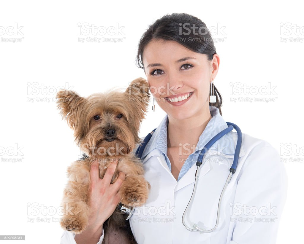 Vet holding a little dog stock photo