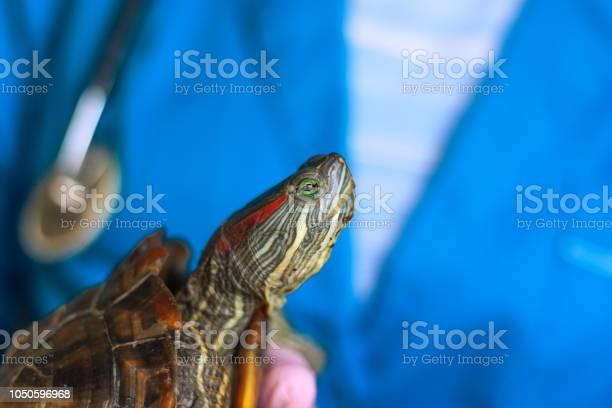 Vet holding a turtle closeup picture id1050596968?b=1&k=6&m=1050596968&s=612x612&h=ec2vvms8nx20seqnqzwo8iftnzz0rz68dd1dh 2klls=
