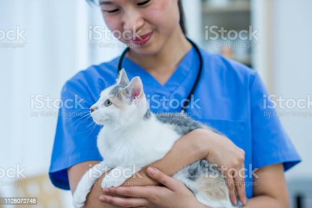 Vet holding and smiling at a cat in her arms in the veterinarians picture id1128072748?b=1&k=6&m=1128072748&s=612x612&h=tfp2tpdtdvgyhlvdjiy7v2imko8u72vjyrntk2lqch8=
