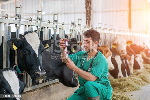 Vet Injection for cow