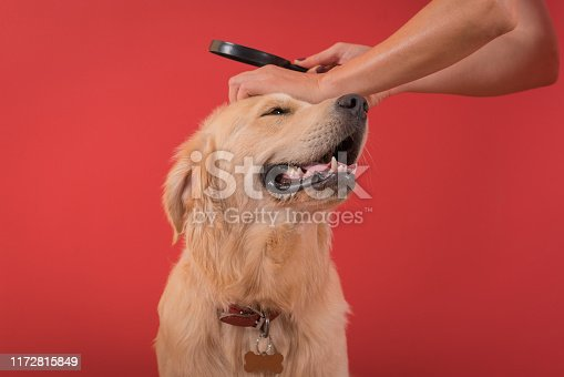 Vet Looking At Dog's Hair Through Magnifying Glass