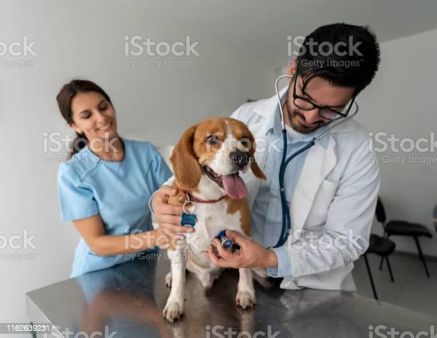 Vet performing a medical exam on a dog picture id1162639231?b=1&k=6&m=1162639231&s=612x612&h=yugnbongc2xyg7s84vgrejzrwj8vuxdmvg8kpprbfhy=