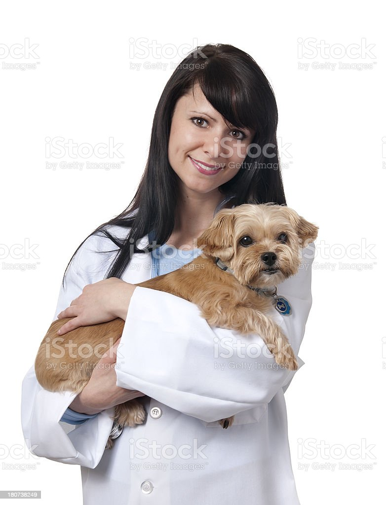 Vet stock photo