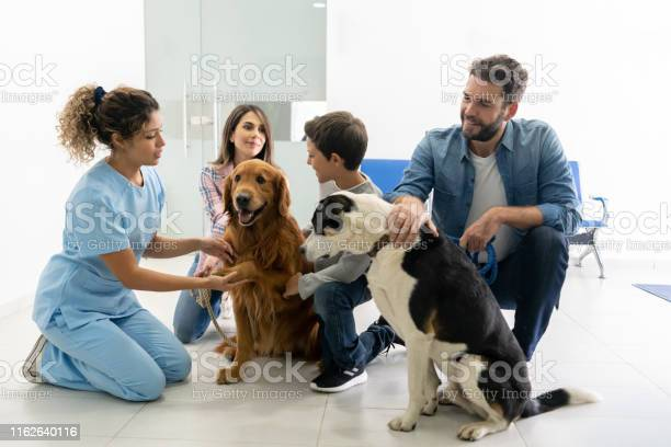 Vet talking to a happy family with their dogs picture id1162640116?b=1&k=6&m=1162640116&s=612x612&h=mpgfvmnkp8bcjtunzgmqeizxdkhsoahtytrx4b8oamy=