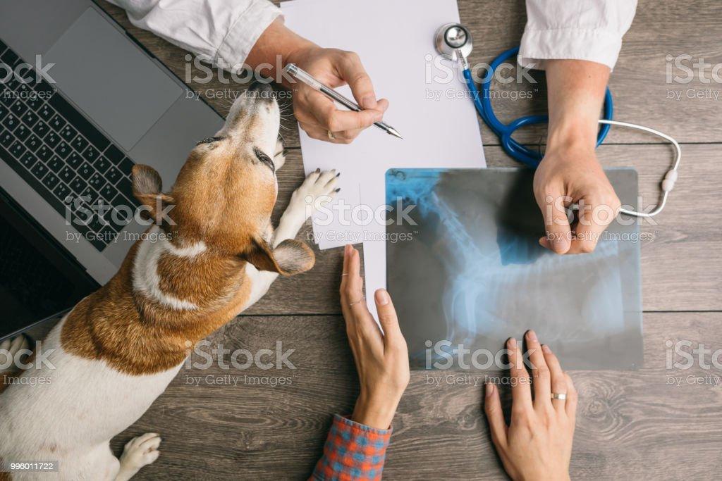 Veterinario con perro Jack Russell terrier. Escritorio de los médicos de la parte superior. Consulta de rayos x - foto de stock