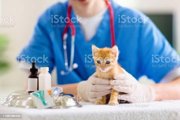 Vet with cat kitten at veterinarian doctor picture id1168286430?b=1&k=6&m=1168286430&s=612x612&h=ve0g zjzps2h75amhovxl8uv6mq pkncixzbbaq9bey=
