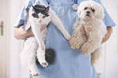 istock Vet with dog and cat 1204163973