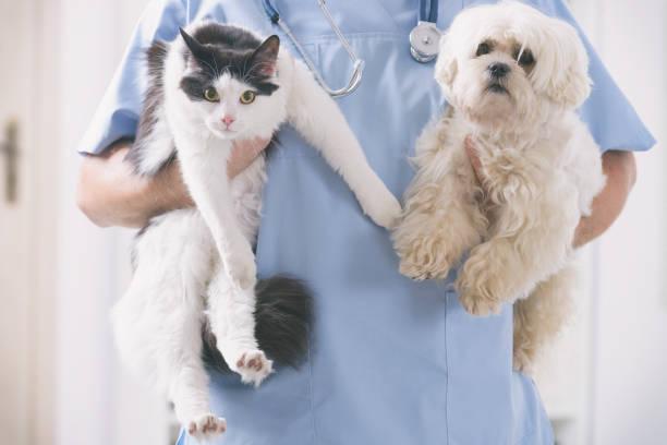 Tierarzt mit Hund und Katze – Foto