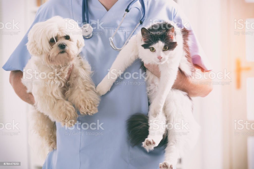 Vet with dog and cat stock photo