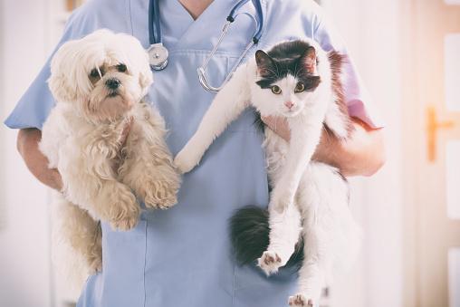 獣医の犬と猫 - 1人のストックフォトや画像を多数ご用意