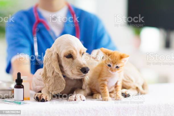 Vet with dog and cat puppy and kitten at doctor picture id1168286284?b=1&k=6&m=1168286284&s=612x612&h=htil xld9z9r i8wbeh16yq8 bqopepdskxioocpdle=