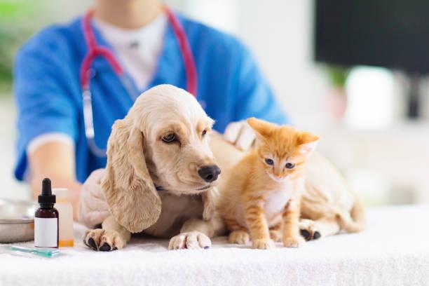Tierarzt mit Hund und Katze. Welpen und Kätzchen beim Arzt. – Foto