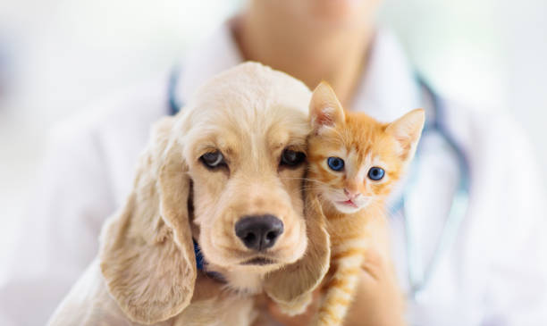 Vet with dog and cat. Puppy and kitten at doctor. stock photo