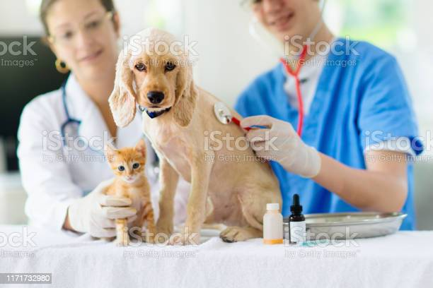 Vet with dog and cat puppy and kitten at doctor picture id1171732980?b=1&k=6&m=1171732980&s=612x612&h=dmkumcqjsu1omk ktgowbrwbnqdooiqju7bpc9axulg=