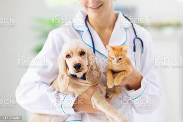 Vet with dog and cat puppy and kitten at doctor picture id1171733307?b=1&k=6&m=1171733307&s=612x612&h=ifxxjm00rmzcn aavojidi91212aw 2tb8elz5uxb04=