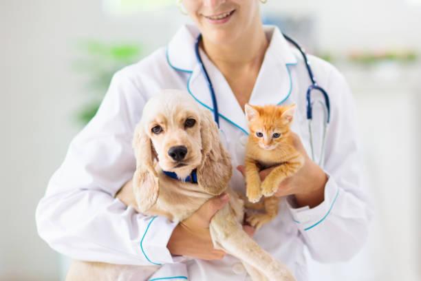 veterinario con perro y gato. cachorro y gatito en el médico. - mascota fotografías e imágenes de stock