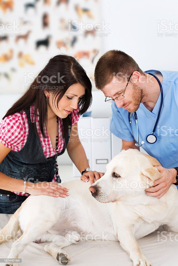 Vet With Dog And Owner royalty-free stock photo
