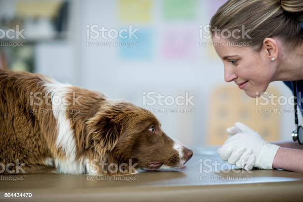 Vet with dog picture id864434470?b=1&k=6&m=864434470&s=612x612&h=cyu5lh6mo35i bibzj 7lp1f6y6s2gt793mkrtxyawe=