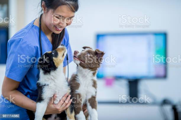 Vet with two border collies picture id931114580?b=1&k=6&m=931114580&s=612x612&h=ptumjfl3rcwectzgoloolxikotatvr di6xwfmo3ayc=