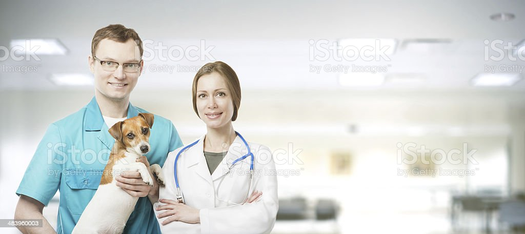vet workers team stock photo