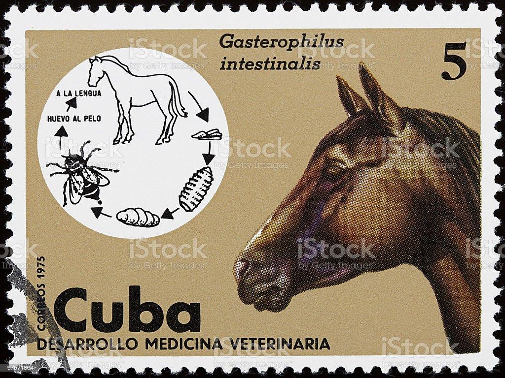 Veterinar Timbre avec cheval photo libre de droits