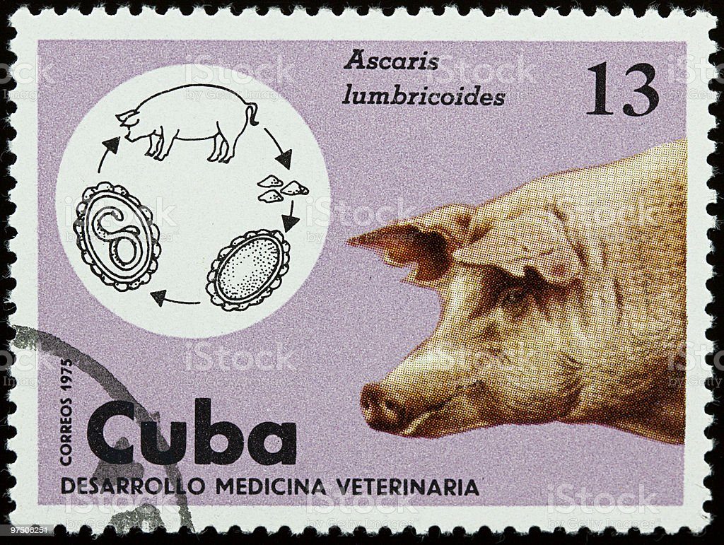 Veterinar stamp with pig royalty-free stock photo