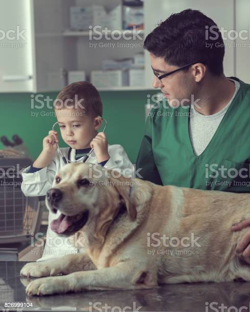 Veterinarian and a young boy examining a dog together picture id826999104?b=1&k=6&m=826999104&s=612x612&h=qwwbcstpnmrzuw6mda8gxkgsu2ifbxncfvqg5bxlznk=