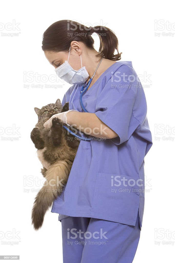 Veterinarian and cat royalty-free stock photo