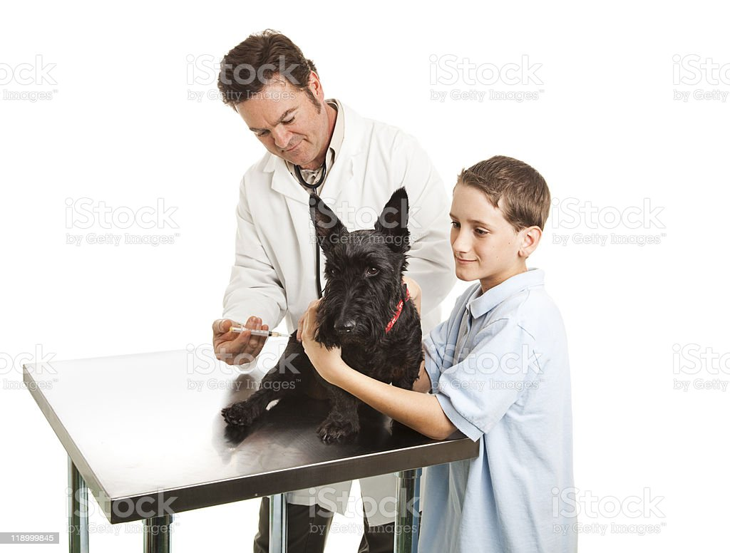 Veterinarian and Helper royalty-free stock photo