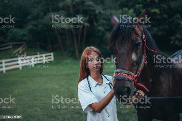 Veterinarian and horse picture id1020775052?b=1&k=6&m=1020775052&s=612x612&h=sxsc8oflxsxcmth asplgs3qonmg6cdd6hw9vzgs5uq=