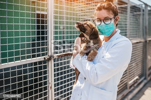 Young female veterinarian with face protective mask working with stray dogs in animal shelter.