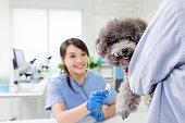 獣医クリニックの獣医