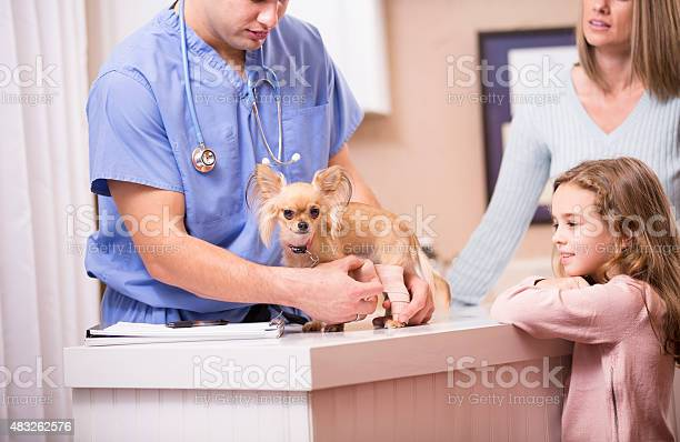 Veterinarian bandages dogs injury as pet owners family looks on picture id483262576?b=1&k=6&m=483262576&s=612x612&h=5bfc5 3rn57akcrq83jaab6b1hpd1 3ltg579wrvjle=