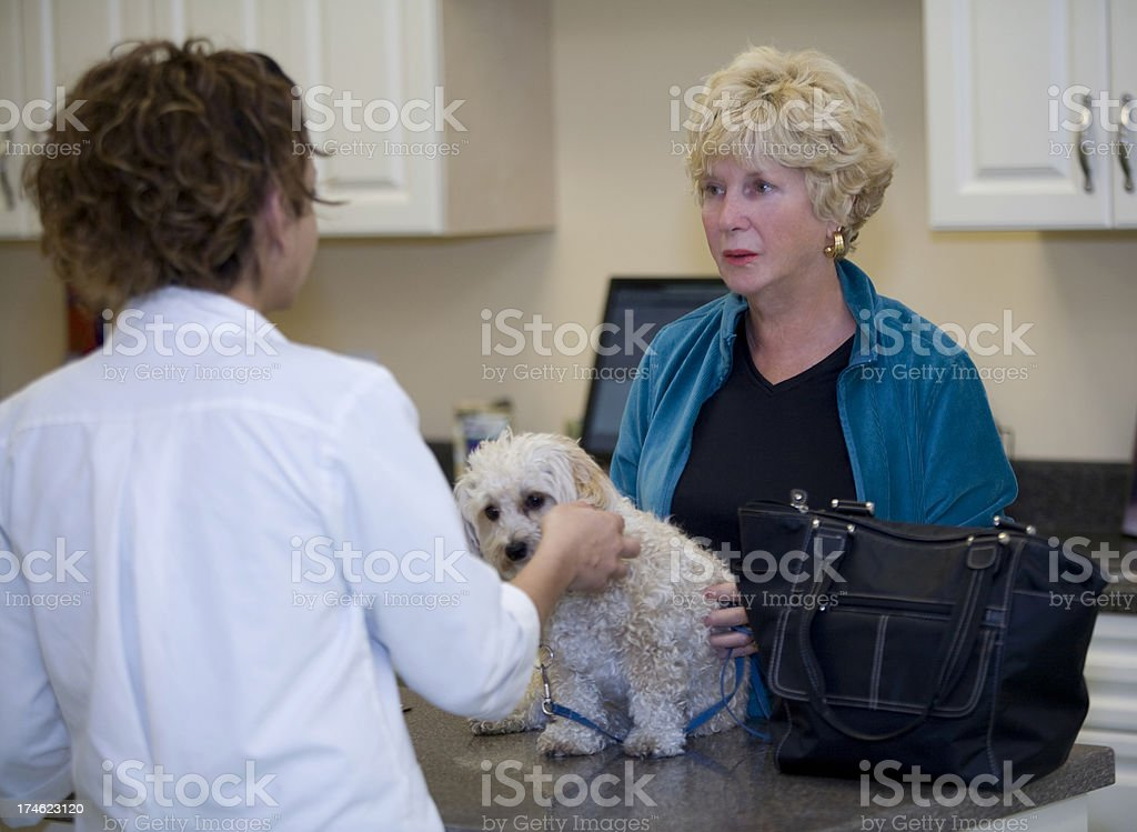 Veterinarian Consults With Client Regarding the Health of Her Dog royalty-free stock photo