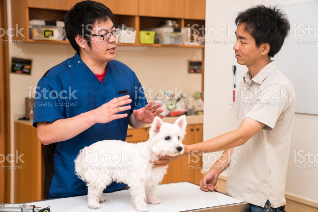 A veterinarian discussing treatment with a pet owner at a animal...