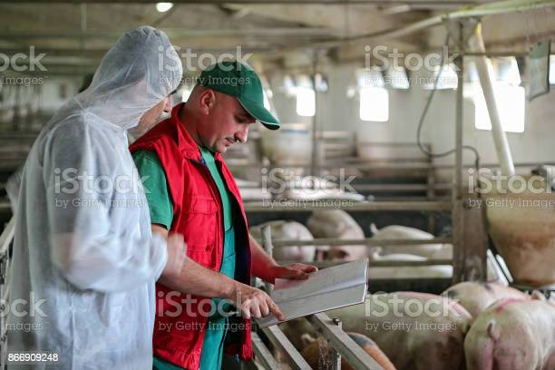 Veterinarian doctor and farmer in pig barn picture id866909248?b=1&k=6&m=866909248&s=612x612&h=ghkls tvwt24rwbtqfdkw6x k2wvd3jru on dv9tou=