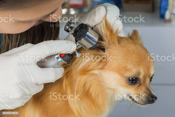 Veterinarian doctor examining a pritty dog picture id693993830?b=1&k=6&m=693993830&s=612x612&h=qihzn1qt0m fvbkafyaefdvcthm97aceirvcqutcjey=