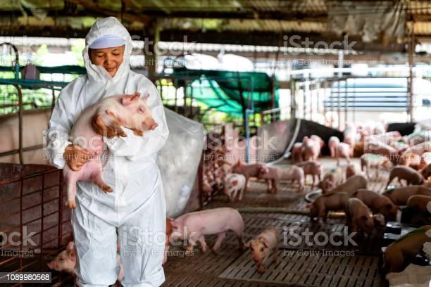 Veterinarian doctor examining pigs at a pig farm picture id1089980568?b=1&k=6&m=1089980568&s=612x612&h=uqpcs0gp rf27g0diurlh9lpzxuuoqmrhnrfqwqla30=