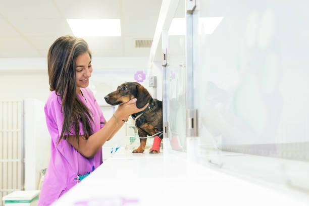 Veterinarian doctor hugging a beautiful dog picture id831832380?b=1&k=6&m=831832380&s=612x612&w=0&h=op7vg nxd9qybibhozgvr1zpyb6ljkf4ztspgbu aau=