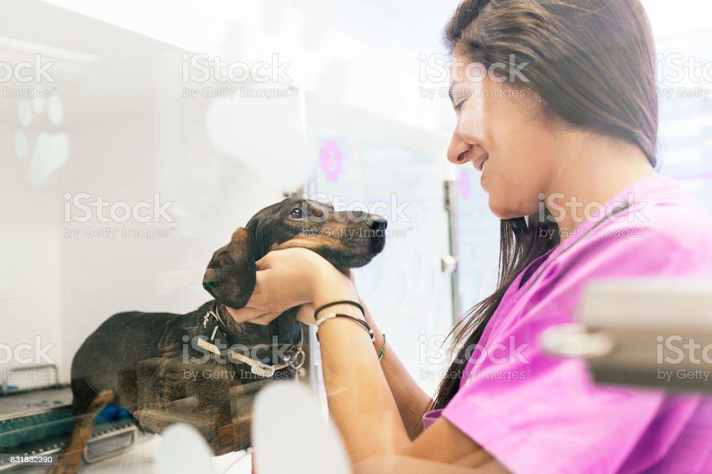 Veterinarian doctor hugging a beautiful dog. stock photo