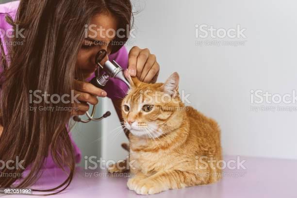 Veterinarian doctor is making a check up of a cute beautiful cat picture id982051992?b=1&k=6&m=982051992&s=612x612&h=l5hdxkh7unlosjep9ckvlxaeqtpvnlagzxztz0e3sae=