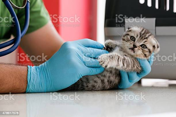 Veterinarian doctor is making check up of cute beautiful kitten picture id478617578?b=1&k=6&m=478617578&s=612x612&h=det3ma56di5icyd0z32csydhvgdwrfdwk l9ywtqbum=