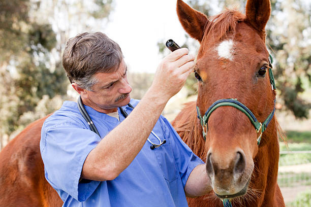 Veterinarian during medical exam of a horse picture id154954455?b=1&k=6&m=154954455&s=612x612&w=0&h=qnqeww3 khdlnpi bbs yrbnspysoe3ta0r3mwela3o=